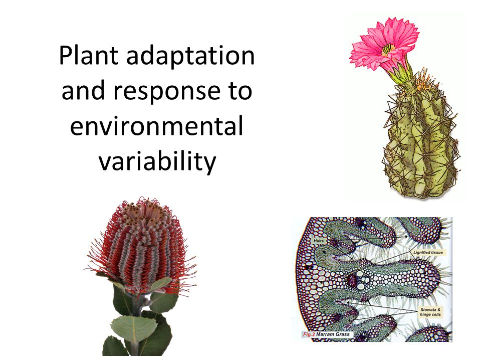In the environment there are both spatial and temporal variations in abiotic factors.