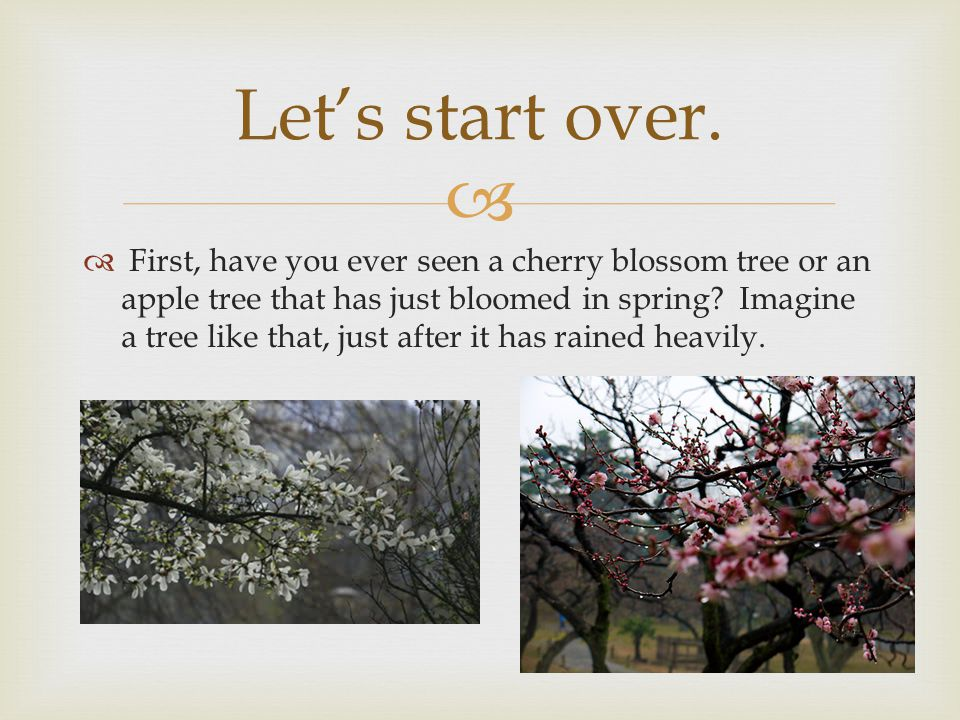   First, have you ever seen a cherry blossom tree or an apple tree that has just bloomed in spring.