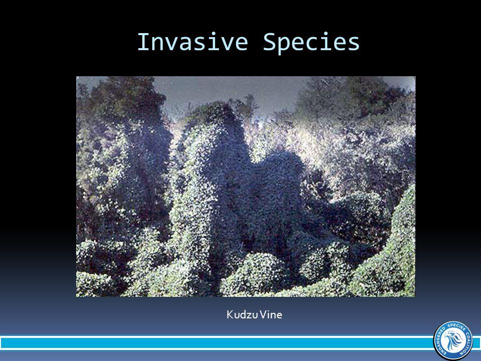 Invasive Species Kudzu Vine