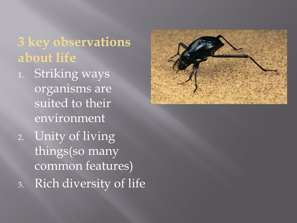 3 key observations about life 1. Striking ways organisms are suited to their environment 2.
