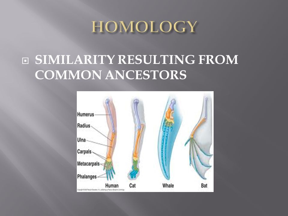  SIMILARITY RESULTING FROM COMMON ANCESTORS
