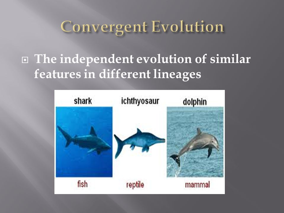  The independent evolution of similar features in different lineages