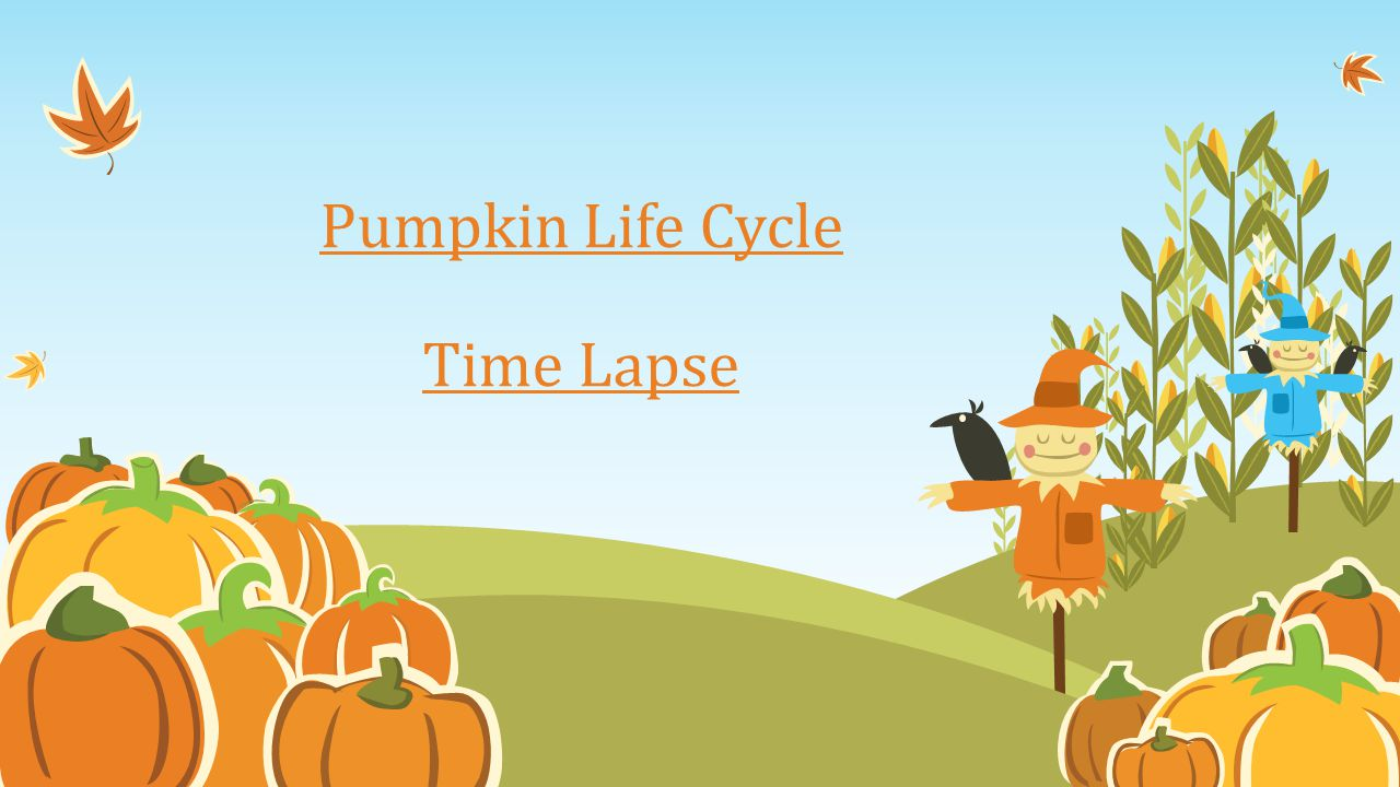Pumpkin Life Cycle Time Lapse