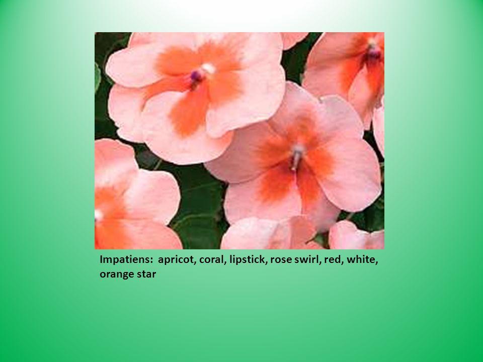 Impatiens: apricot, coral, lipstick, rose swirl, red, white, orange star