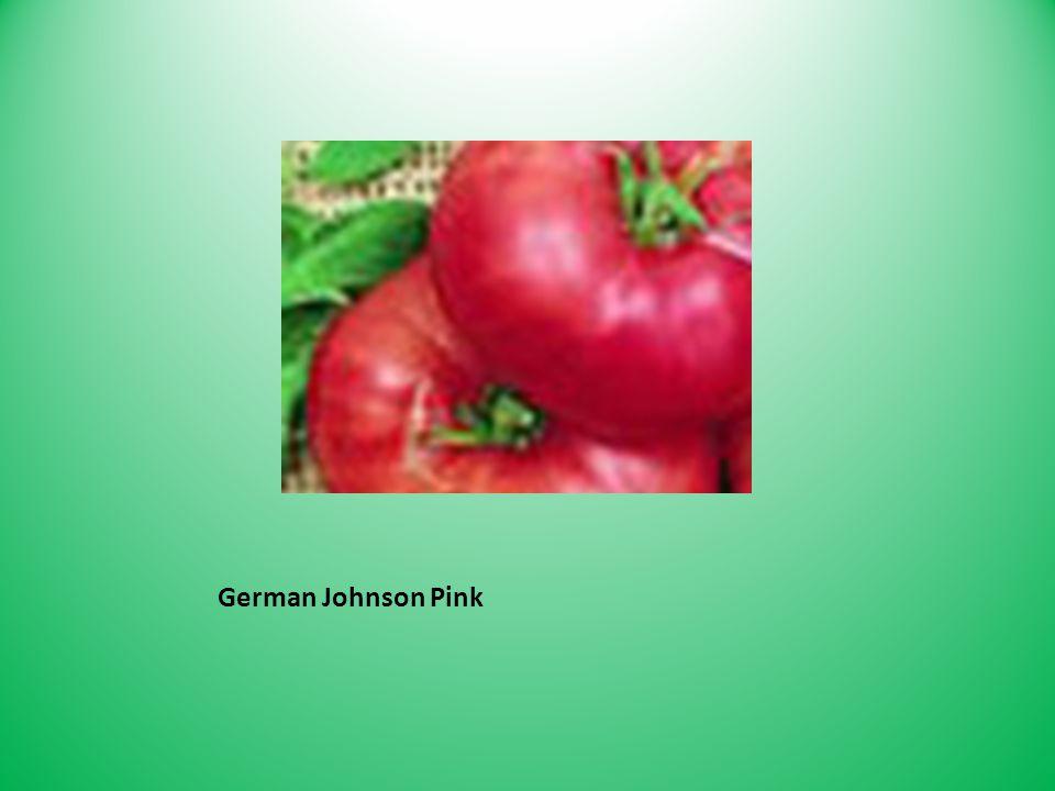 German Johnson Pink