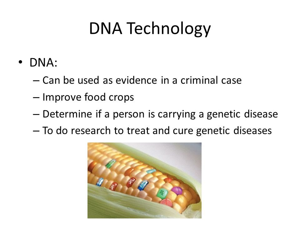 DNA Technology DNA: – Can be used as evidence in a criminal case – Improve food crops – Determine if a person is carrying a genetic disease – To do research to treat and cure genetic diseases