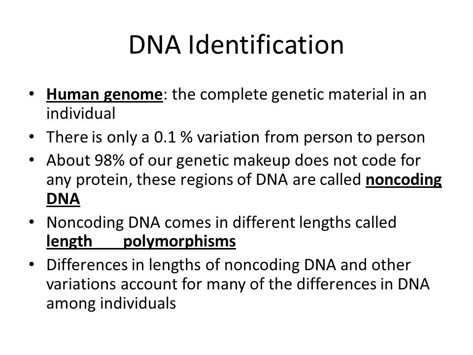 DNA Identification Human genome: the complete genetic material in an individual There is only a 0.1 % variation from person to person About 98% of our