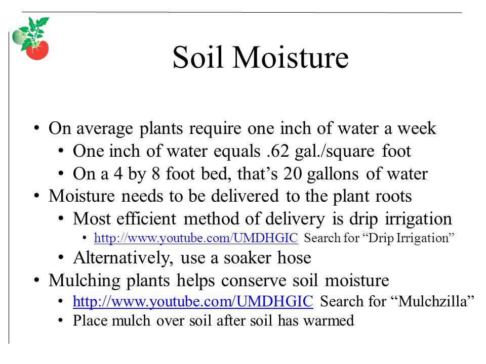 Soil Moisture On average plants require one inch of water a week One inch of water equals.62 gal./square foot On a 4 by 8 foot bed, that's 20 gallons of water Moisture needs to be delivered to the plant roots Most efficient method of delivery is drip irrigation http://www.youtube.com/UMDHGIC Search for Drip Irrigation http://www.youtube.com/UMDHGIC Alternatively, use a soaker hose Mulching plants helps conserve soil moisture http://www.youtube.com/UMDHGIC Search for Mulchzilla http://www.youtube.com/UMDHGIC Place mulch over soil after soil has warmed