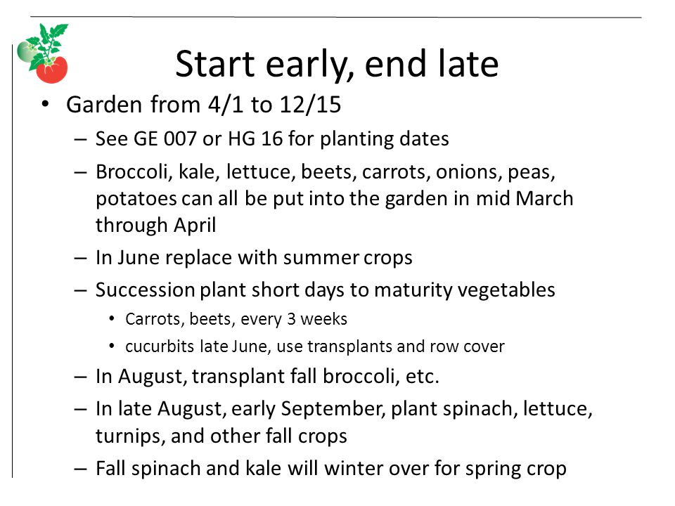 Start early, end late Garden from 4/1 to 12/15 – See GE 007 or HG 16 for planting dates – Broccoli, kale, lettuce, beets, carrots, onions, peas, potatoes can all be put into the garden in mid March through April – In June replace with summer crops – Succession plant short days to maturity vegetables Carrots, beets, every 3 weeks cucurbits late June, use transplants and row cover – In August, transplant fall broccoli, etc.