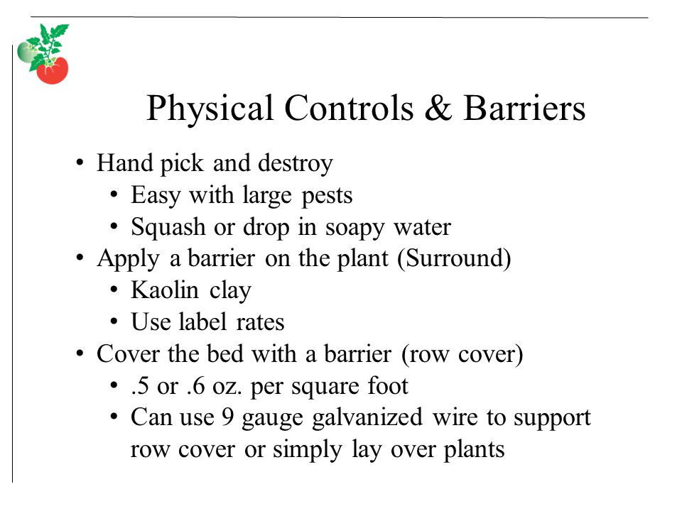 Physical Controls & Barriers Hand pick and destroy Easy with large pests Squash or drop in soapy water Apply a barrier on the plant (Surround) Kaolin clay Use label rates Cover the bed with a barrier (row cover).5 or.6 oz.