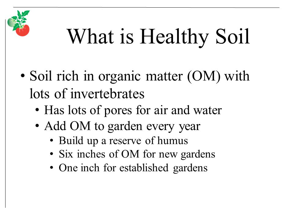 What is Healthy Soil Soil rich in organic matter (OM) with lots of invertebrates Has lots of pores for air and water Add OM to garden every year Build up a reserve of humus Six inches of OM for new gardens One inch for established gardens