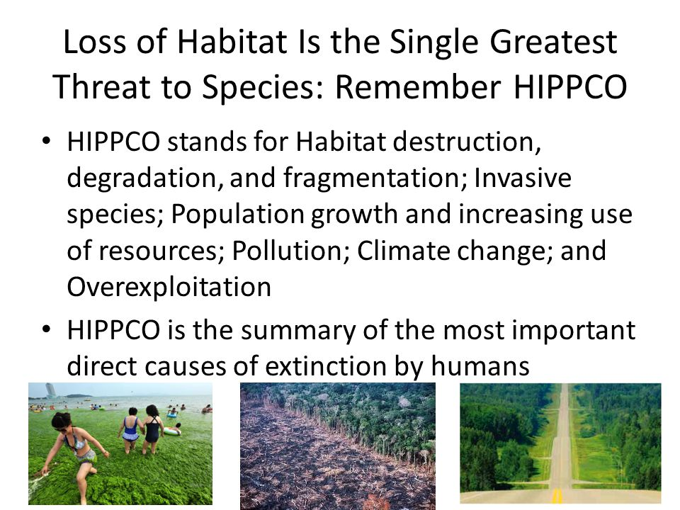 Loss of Habitat Is the Single Greatest Threat to Species: Remember HIPPCO HIPPCO stands for Habitat destruction, degradation, and fragmentation; Invas