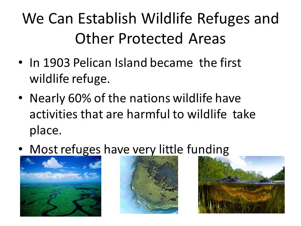 We Can Establish Wildlife Refuges and Other Protected Areas In 1903 Pelican Island became the first wildlife refuge. Nearly 60% of the nations wildlif