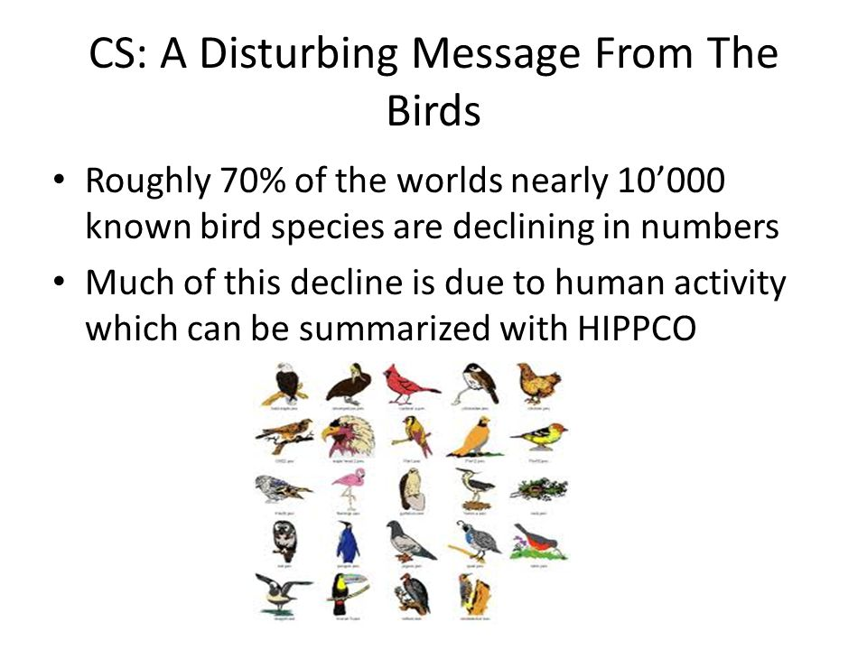 CS: A Disturbing Message From The Birds Roughly 70% of the worlds nearly 10'000 known bird species are declining in numbers Much of this decline is du