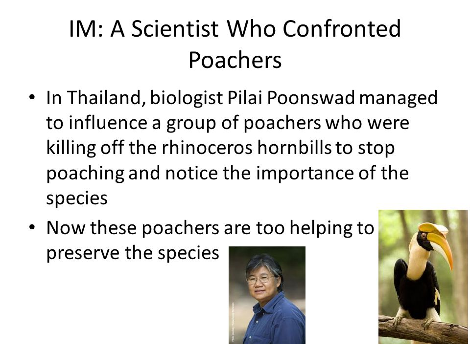 IM: A Scientist Who Confronted Poachers In Thailand, biologist Pilai Poonswad managed to influence a group of poachers who were killing off the rhinoc