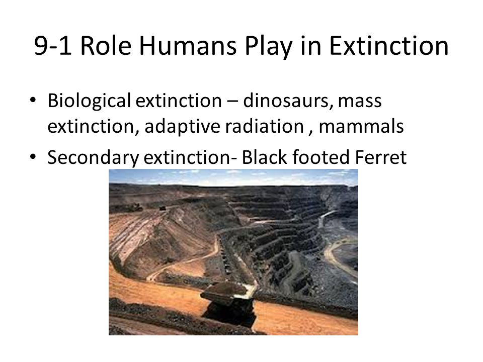 9-1 Role Humans Play in Extinction Biological extinction – dinosaurs, mass extinction, adaptive radiation, mammals Secondary extinction- Black footed