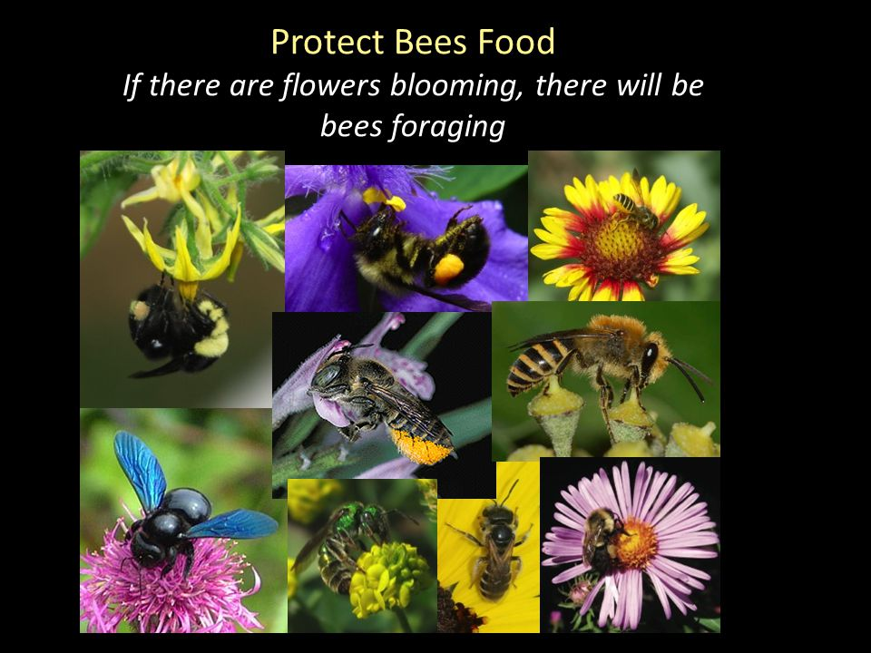 Protect Bees Food If there are flowers blooming, there will be bees foraging