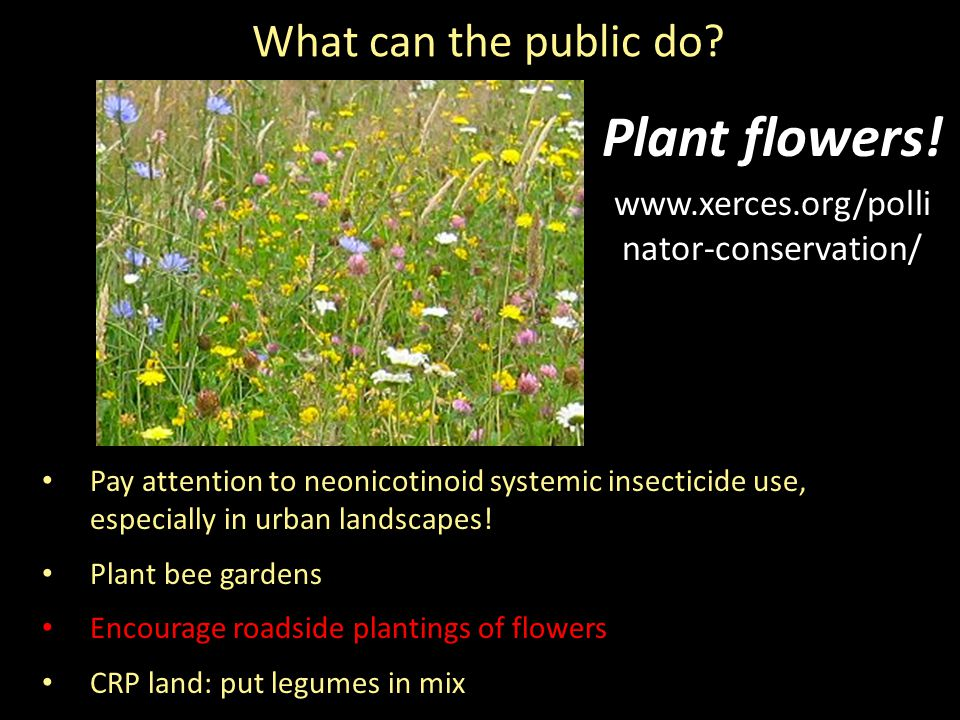 What can the public do. Plant flowers.