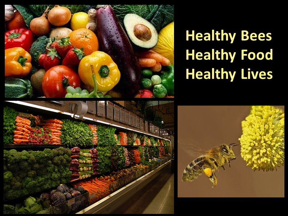 Healthy Bees Healthy Food Healthy Lives