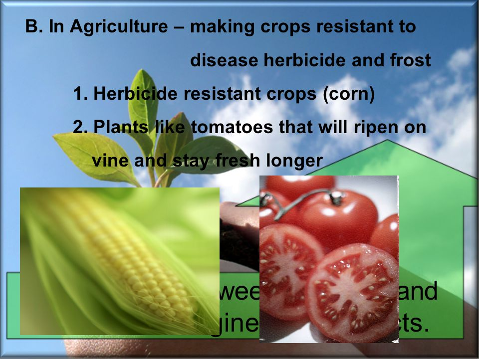 Differentiate between adaptive and assistive bioengineered products. B. In Agriculture – making crops resistant to disease herbicide and frost 1. Herb