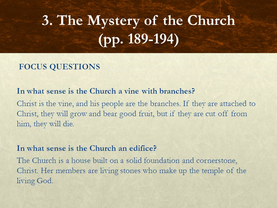 FOCUS QUESTIONS In what sense is the Church a vine with branches? Christ is the vine, and his people are the branches. If they are attached to Christ,