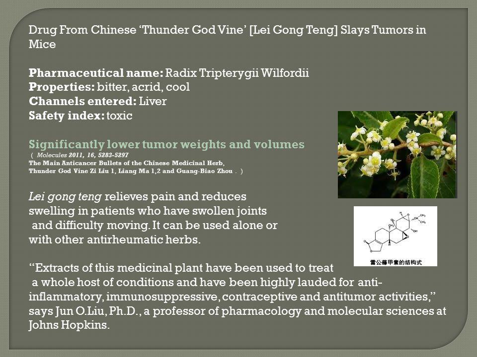 Drug From Chinese 'Thunder God Vine' [Lei Gong Teng] Slays Tumors in Mice Pharmaceutical name: Radix Tripterygii Wilfordii Properties: bitter, acrid,