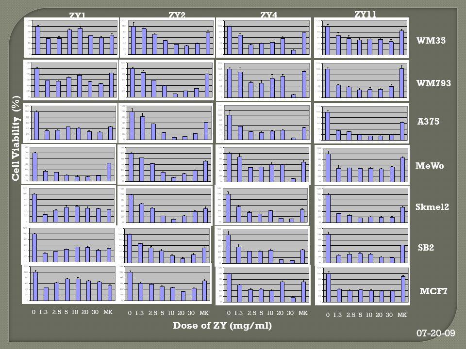 Cell Viability (%) WM35 WM793 A375 MeWo Skmel2 SB2 ZY1 ZY2 ZY4 ZY11 MCF7 0 1.3 2.5 5 10 20 30 MK Dose of ZY (mg/ml) 07-20-09