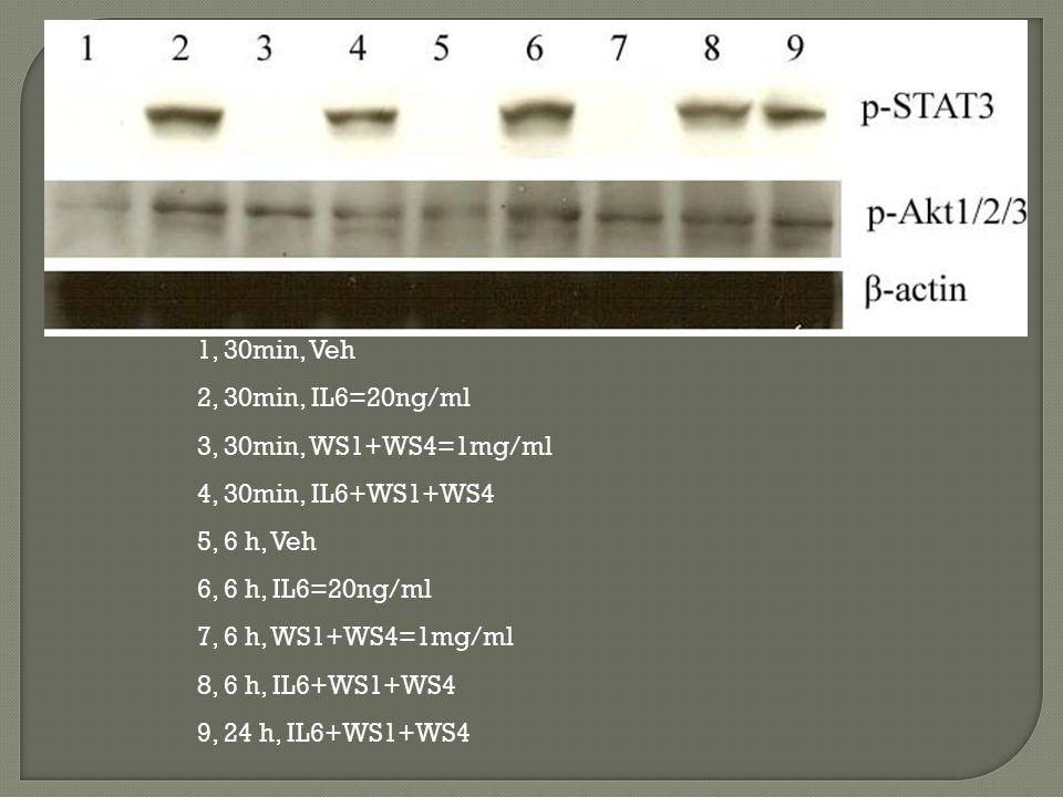 1, 30min, Veh 2, 30min, IL6=20ng/ml 3, 30min, WS1+WS4=1mg/ml 4, 30min, IL6+WS1+WS4 5, 6 h, Veh 6, 6 h, IL6=20ng/ml 7, 6 h, WS1+WS4=1mg/ml 8, 6 h, IL6+