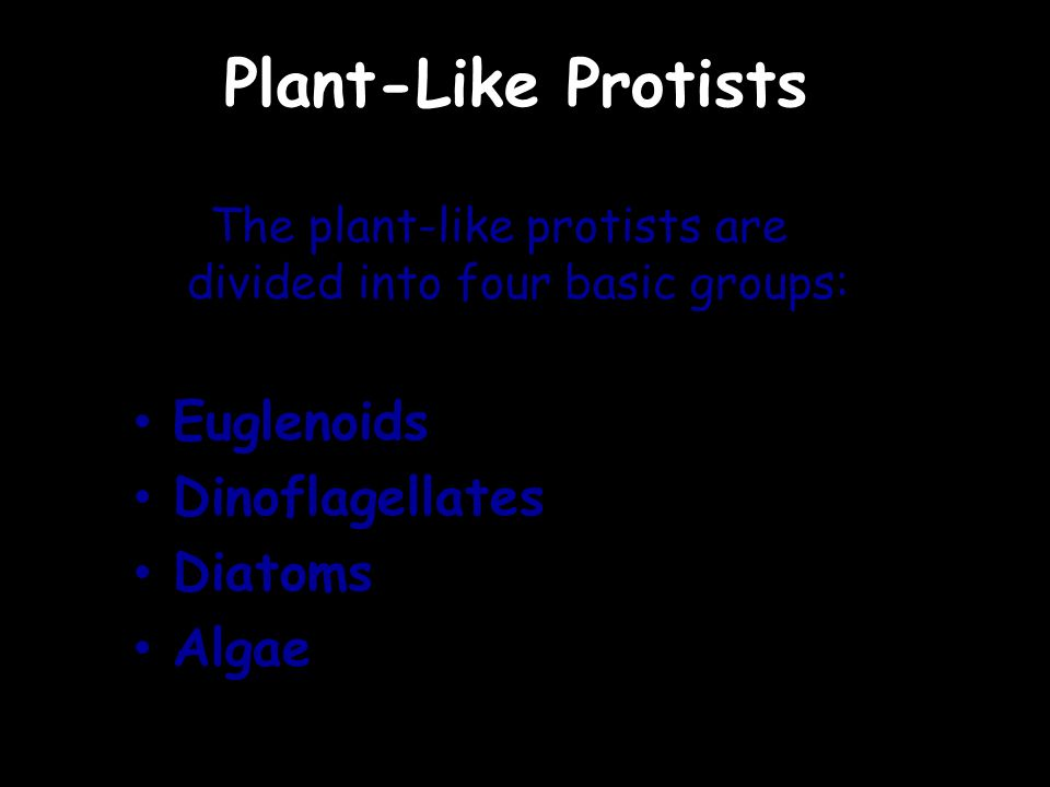 Plant-Like Protists The plant-like protists are divided into four basic groups: Euglenoids Dinoflagellates Diatoms Algae