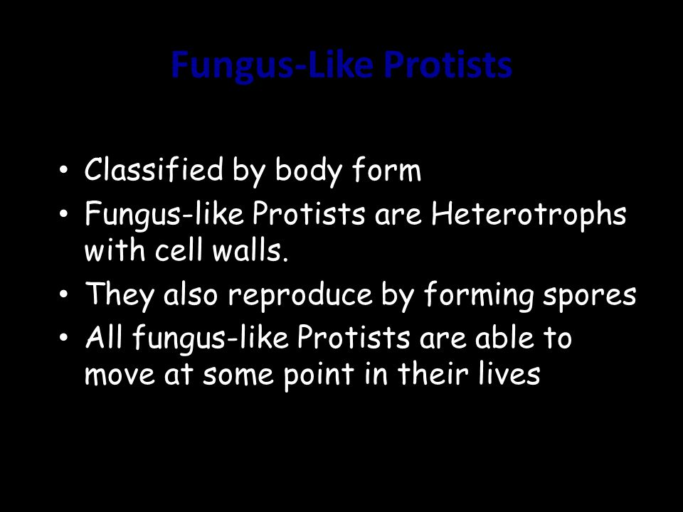 Fungus-Like Protists Classified by body form Fungus-like Protists are Heterotrophs with cell walls. They also reproduce by forming spores All fungus-l