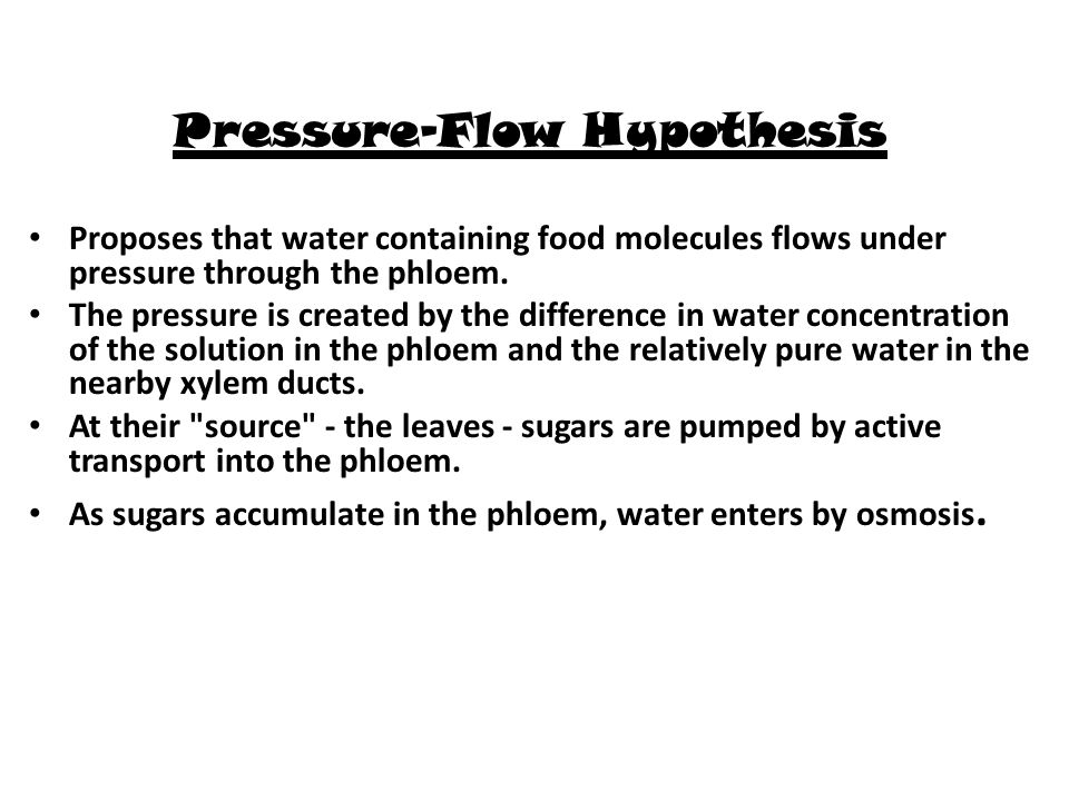 Pressure-Flow Hypothesis Proposes that water containing food molecules flows under pressure through the phloem. The pressure is created by the differe