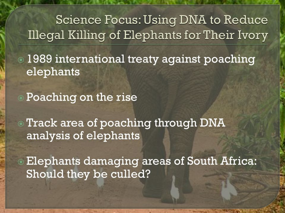  1989 international treaty against poaching elephants  Poaching on the rise  Track area of poaching through DNA analysis of elephants  Elephants d