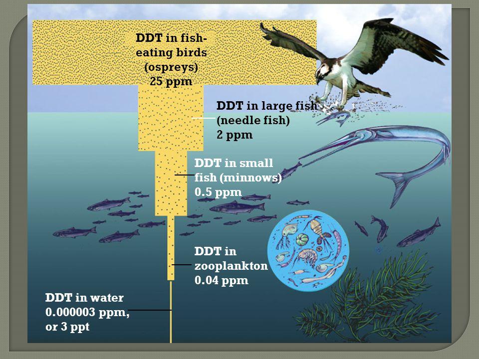 DDT in fish- eating birds (ospreys) 25 ppm DDT in large fish (needle fish) 2 ppm DDT in small fish (minnows) 0.5 ppm DDT in zooplankton 0.04 ppm DDT in water 0.000003 ppm, or 3 ppt