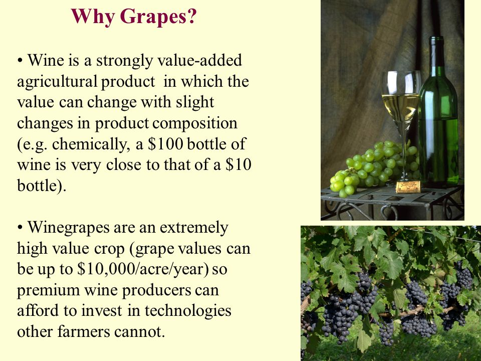Why Grapes.