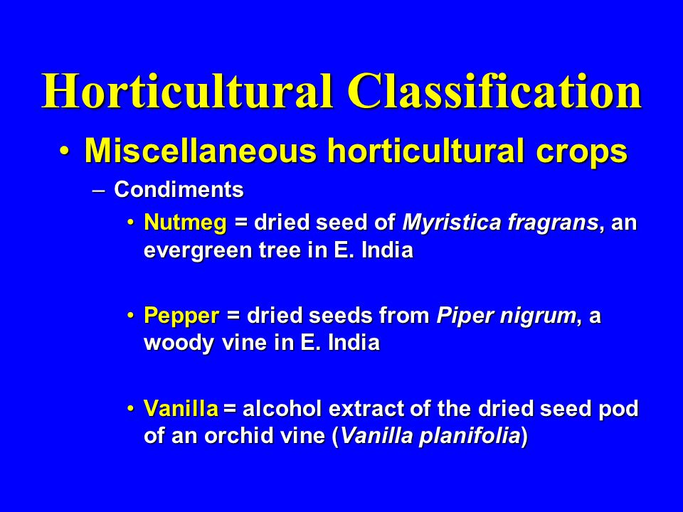 Horticultural Classification Miscellaneous horticultural cropsMiscellaneous horticultural crops –Condiments Nutmeg = dried seed of Myristica fragrans, an evergreen tree in E.