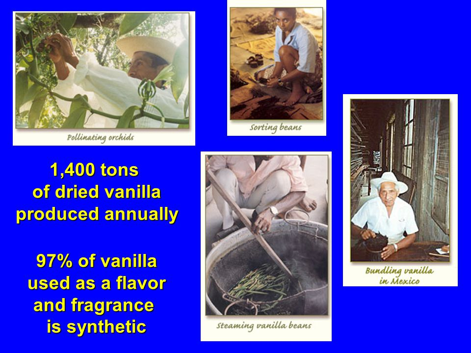 1,400 tons of dried vanilla produced annually 97% of vanilla used as a flavor used as a flavor and fragrance is synthetic