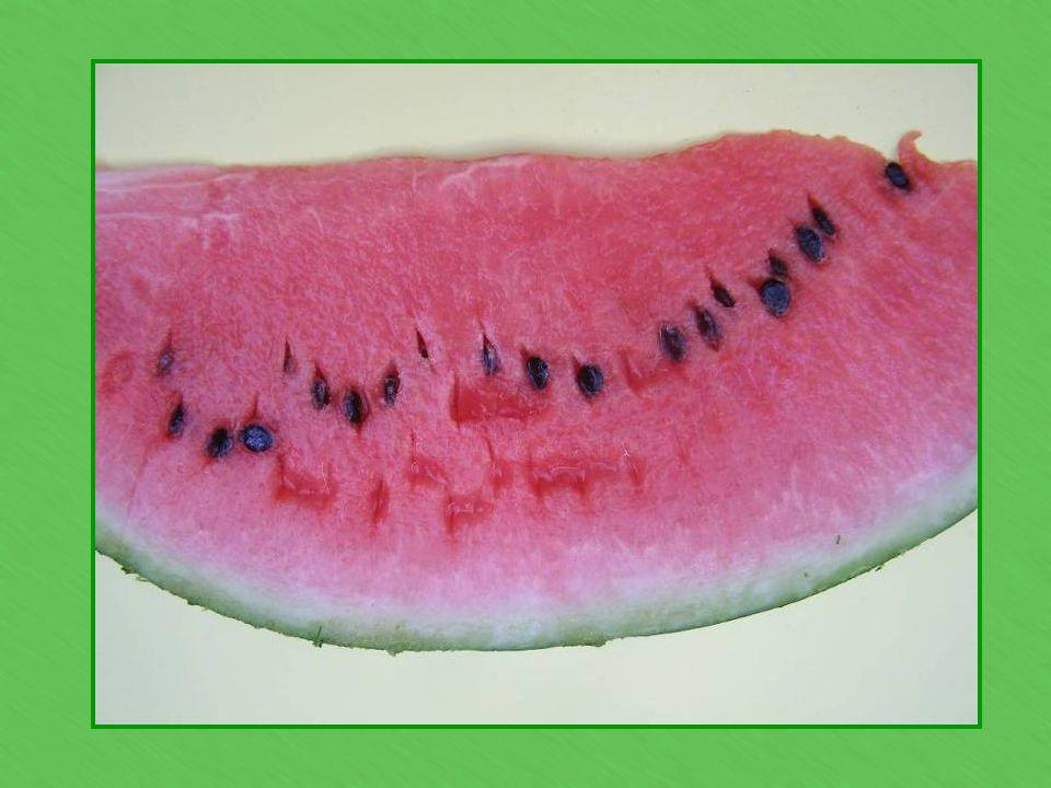 We make a watermelon craft.