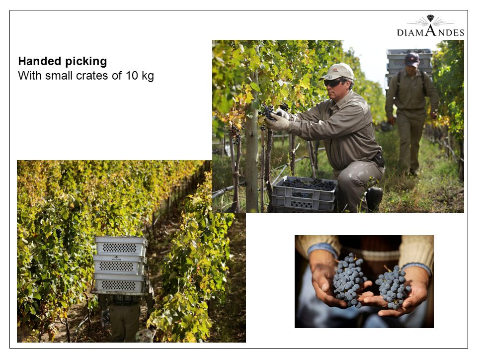 Handed picking With small crates of 10 kg