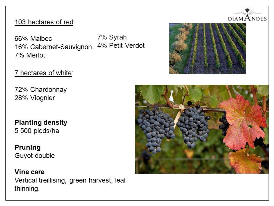 Planting density 5 500 pieds/ha Pruning Guyot double Vine care Vertical treillising, green harvest, leaf thinning.