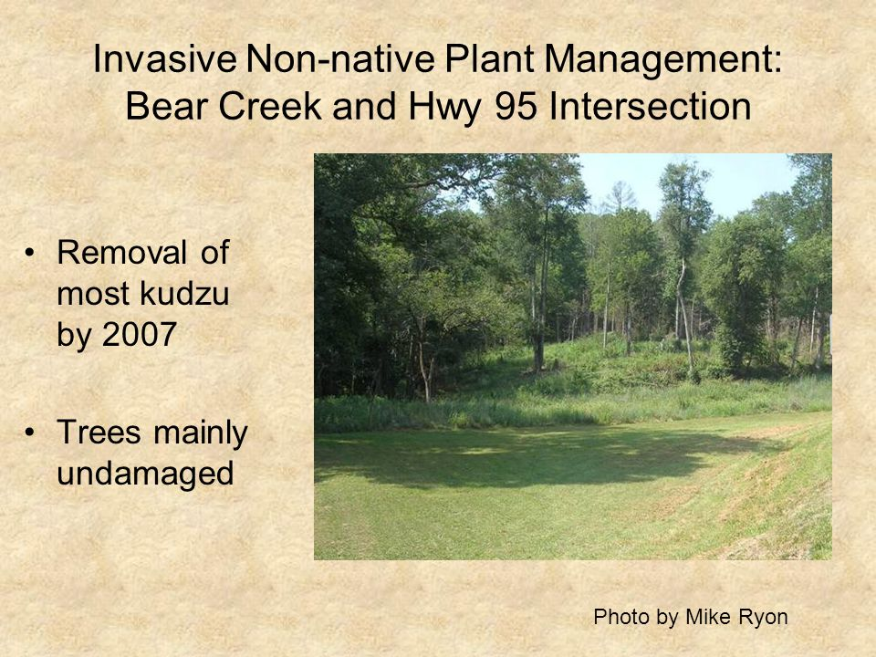 Invasive Non-native Plant Management: Bear Creek and Hwy 95 Intersection Removal of most kudzu by 2007 Trees mainly undamaged Photo by Mike Ryon