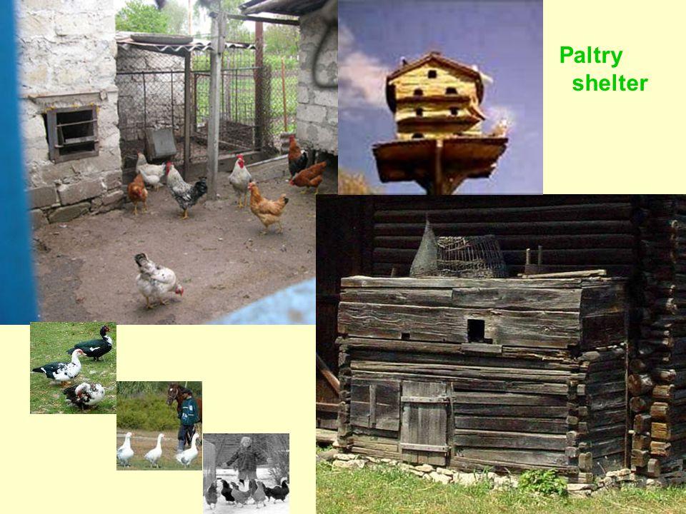 Paltry shelter