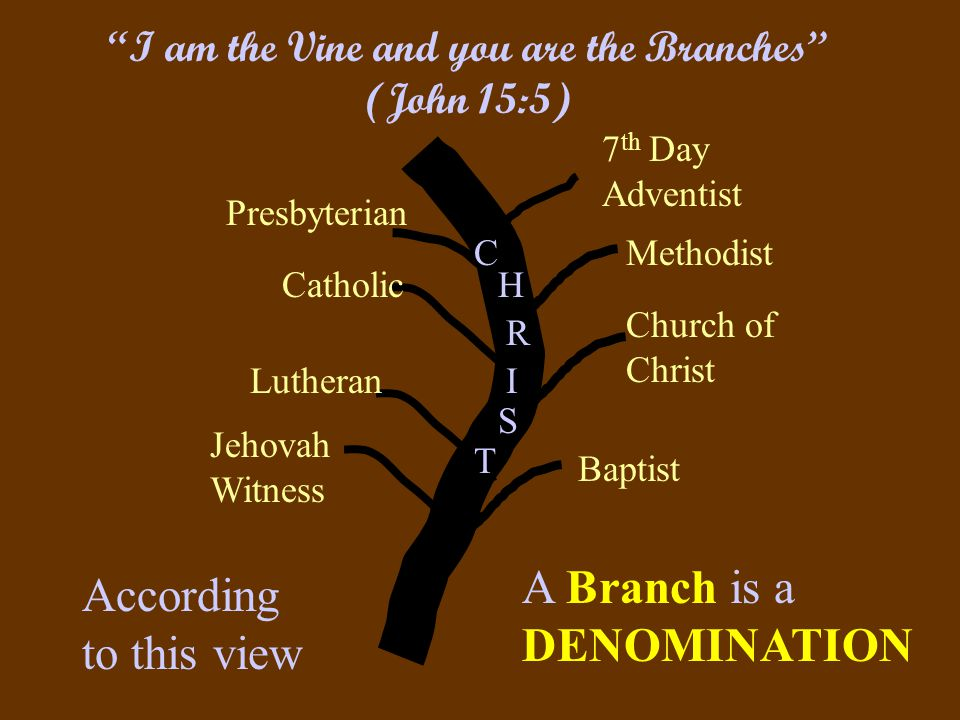 Presbyterian Catholic Baptist Church of Christ Methodist 7 th Day Adventist Lutheran Jehovah Witness C H I R T S I am the Vine and you are the Branches (John 15:5) According to this view A Branch is a DENOMINATION