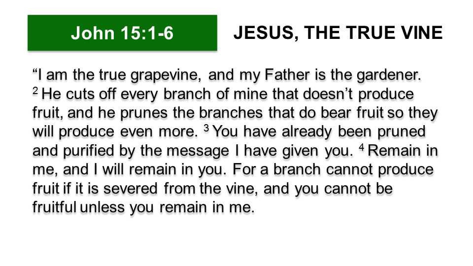 5 Yes, I am the vine; you are the branches.