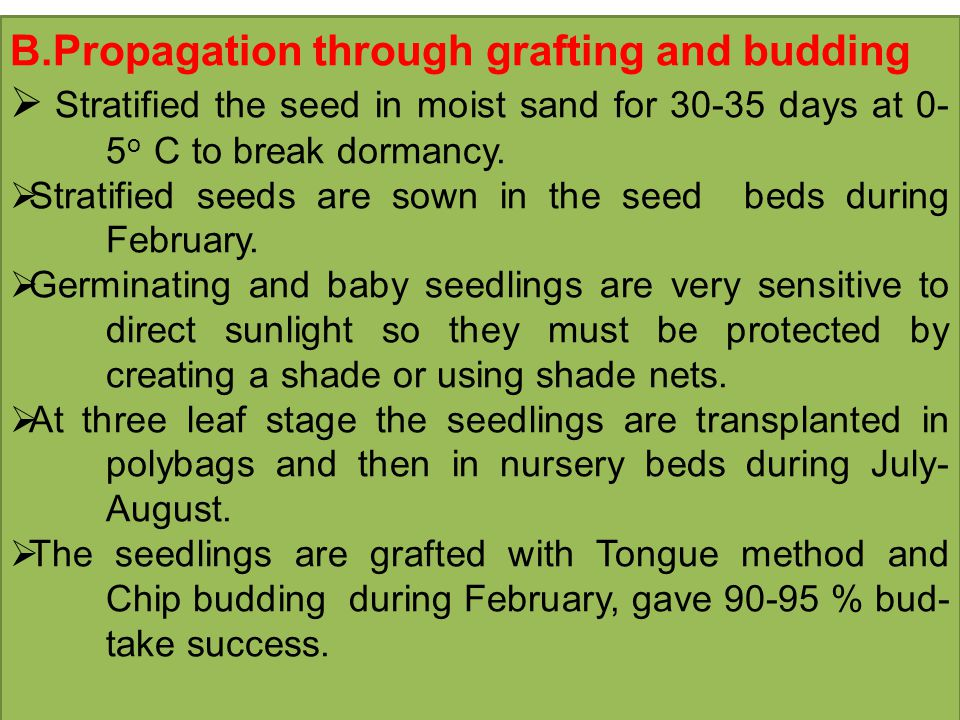 B.Propagation through grafting and budding  Stratified the seed in moist sand for 30-35 days at 0- 5 o C to break dormancy.
