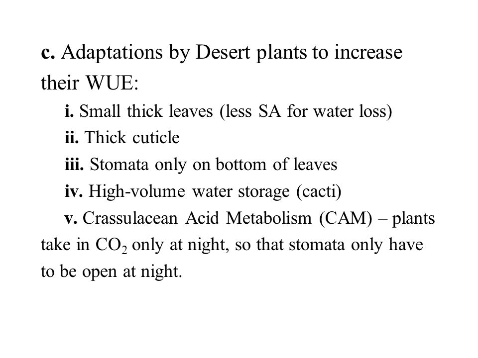 c. Adaptations by Desert plants to increase their WUE: i.