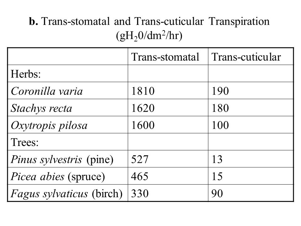Trans-stomatalTrans-cuticular Herbs: Coronilla varia1810190 Stachys recta1620180 Oxytropis pilosa1600100 Trees: Pinus sylvestris (pine)52713 Picea abies (spruce)46515 Fagus sylvaticus (birch)33090 b.