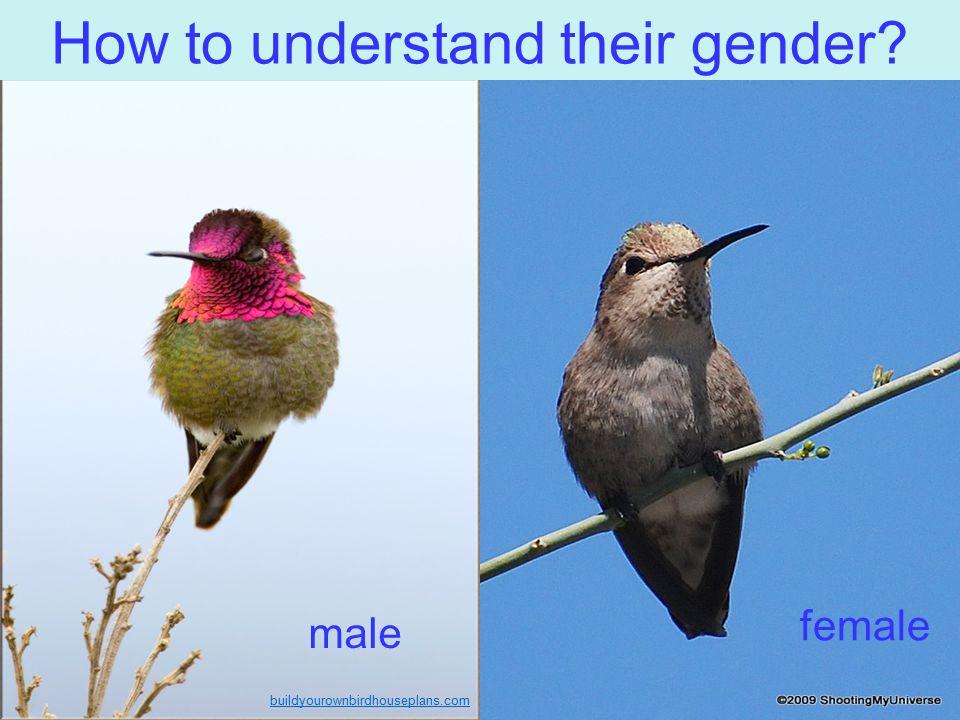 How to understand their gender? buildyourownbirdhouseplans.com male female