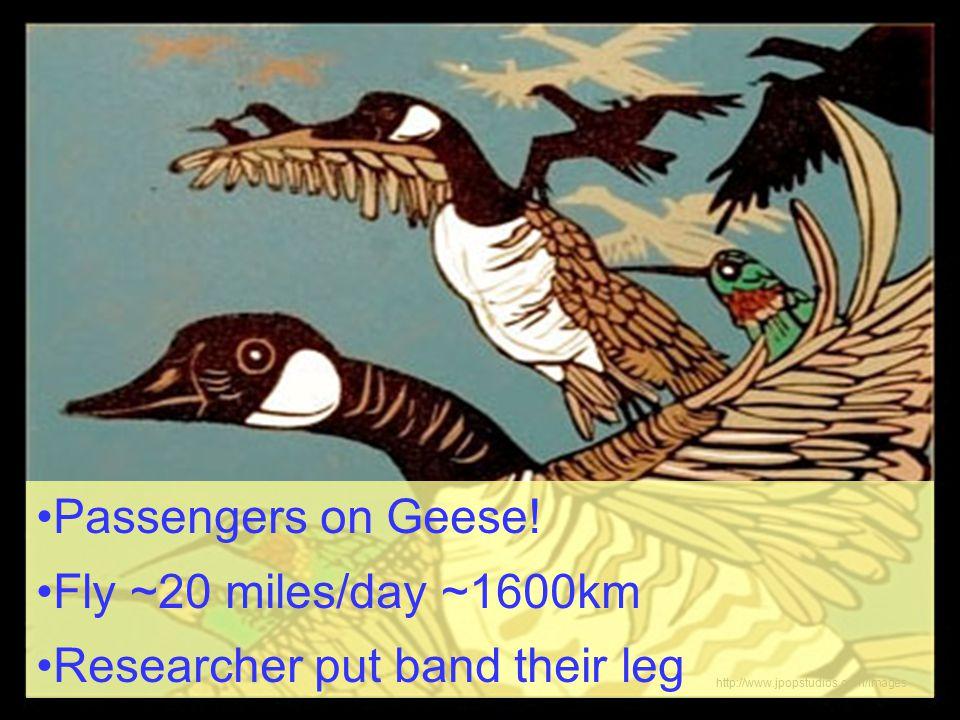 http://www.jpopstudios.com/images Passengers on Geese.