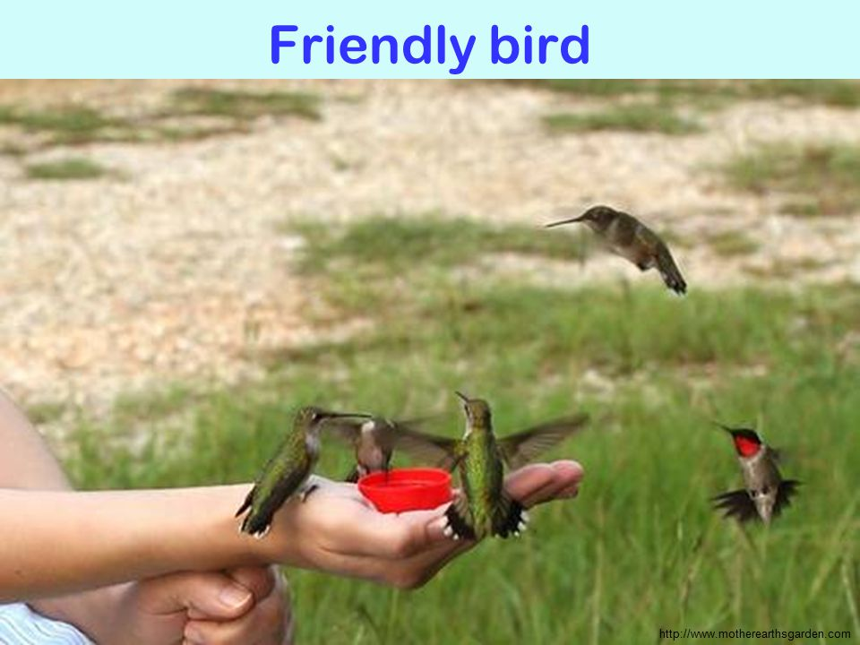 Friendly bird http://www.motherearthsgarden.com