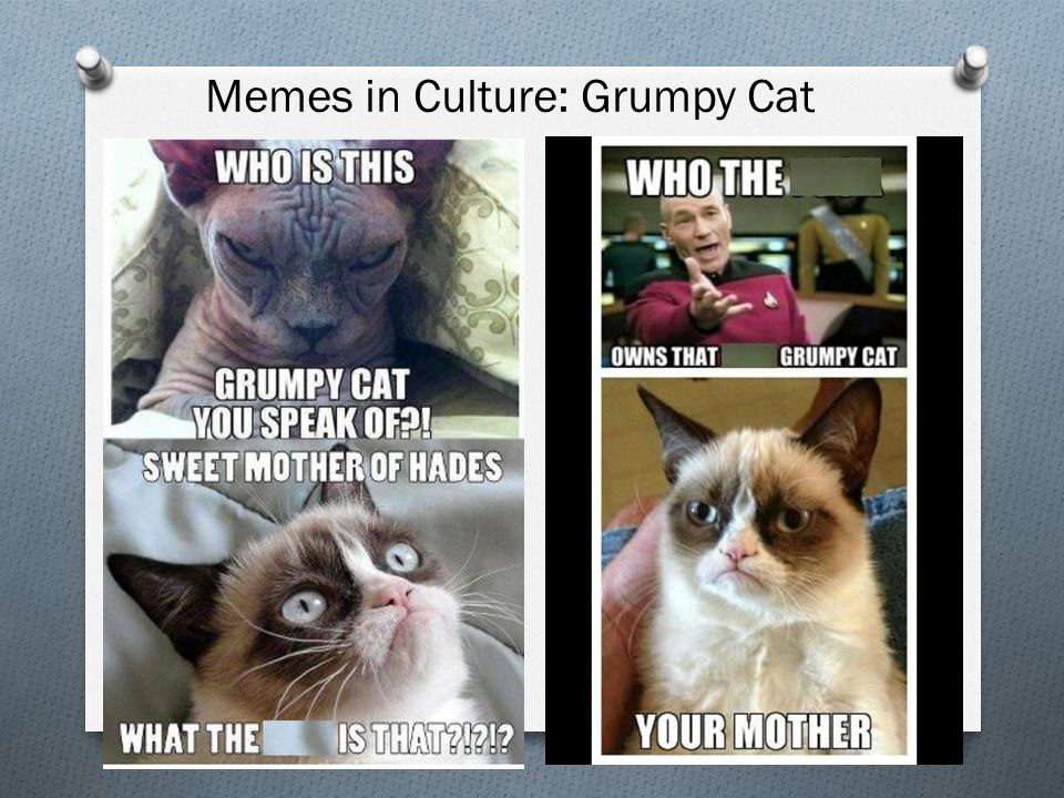 Memes in Culture: Grumpy Cat